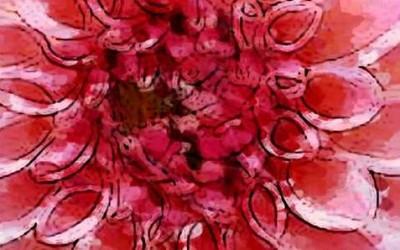 Die empfindsame starke rosa Dahlie