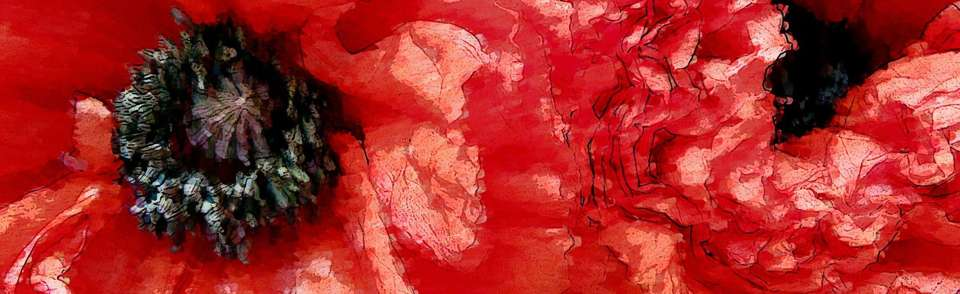 Leidenschaftliche rote Mohnblumen
