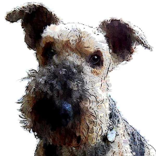 Krafttier HUND Airedale Terrier - Bilder der Kraft als Spiegel für deine Seele.