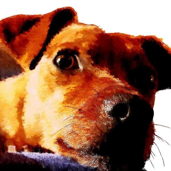 Krafttier Hund Zwergpinscher bei www.rapunzellounge.de