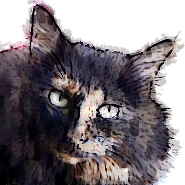 Zur Krafttier Katze Bedeutung