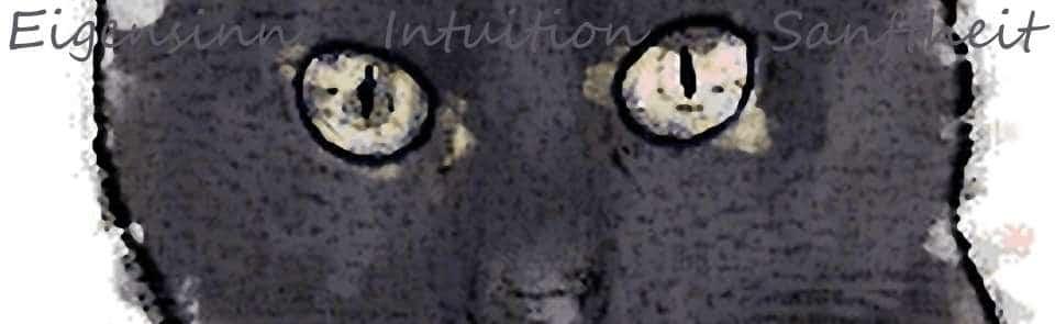 Sanftheit beim Krafttier Katze schwarz