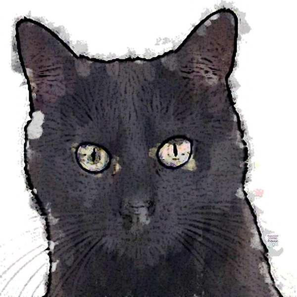 Krafttier Katze schwarz bei www.rapunzellounge.de