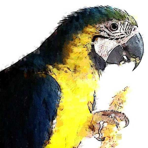 Zur Krafttier Papagei Bedeutung