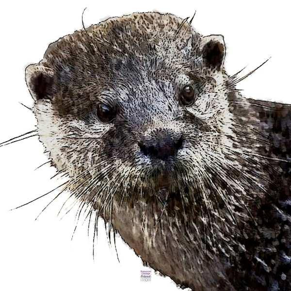Krafttier Otter bei www.rapunzellounge.de