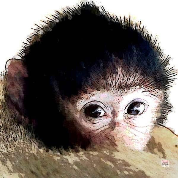 Krafttier Affe Schimpanse bei www.rapunzellounge.de