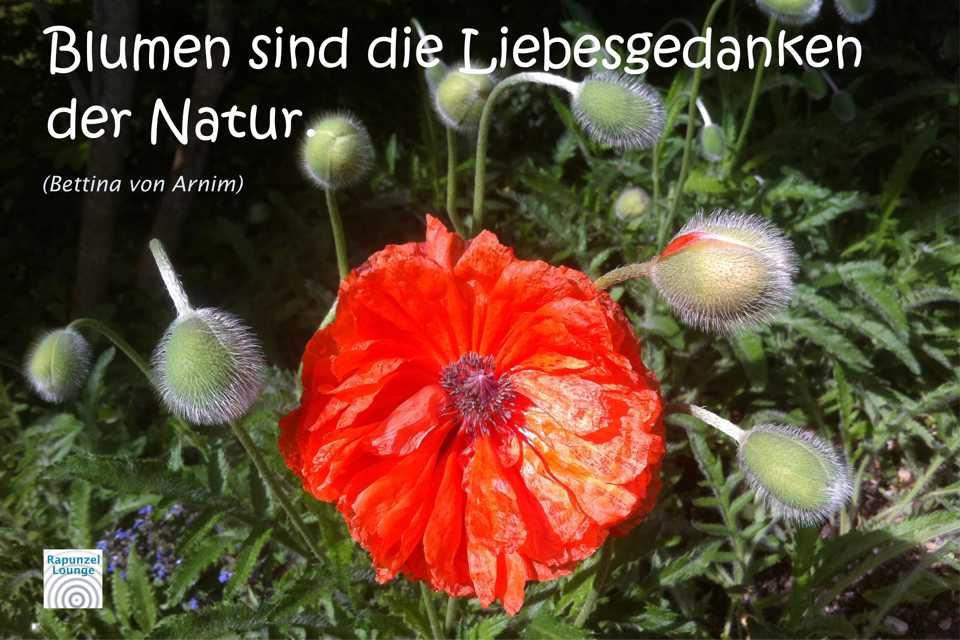 Liebesgedanken der Natur
