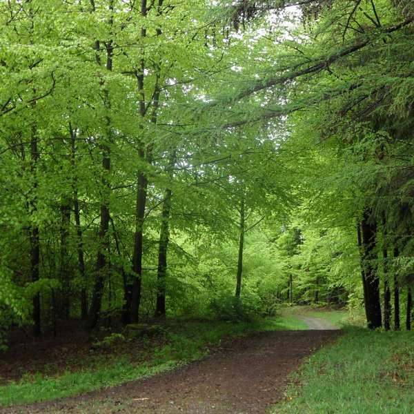 Entspannung mit der Farbe Grün - Farben Bedeutung