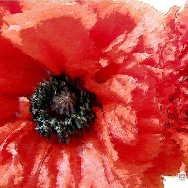 Mohnblumen-Paar in rot für mehr Sinnlichkeit und Leidenschaft