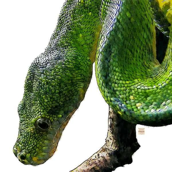 Zur Krafttier Schlange Bedeutung