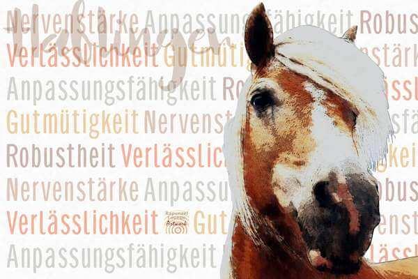 Krafttier PFERD Haflinger mit Resonanzen als Poster oder Wandbild