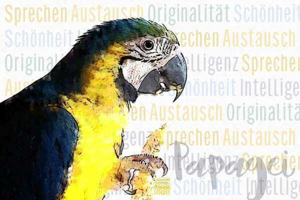Krafttier Papagei Wesen bei www.rapunzellounge.de