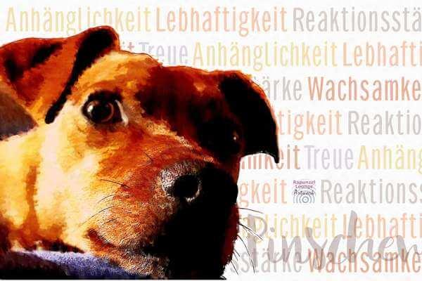 Krafttier Hund Zwergpinscher Wesen bei rapunzellounge.de