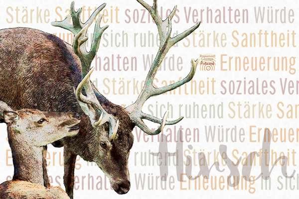 Das Wesen vom Krafttier Hirsch