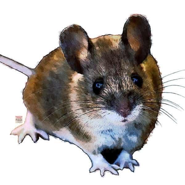 Die Maus als Krafttier