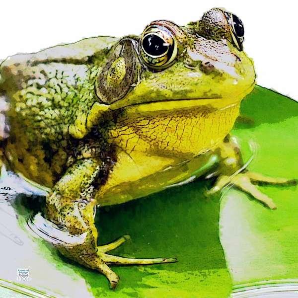 Der Frosch als Krafttier