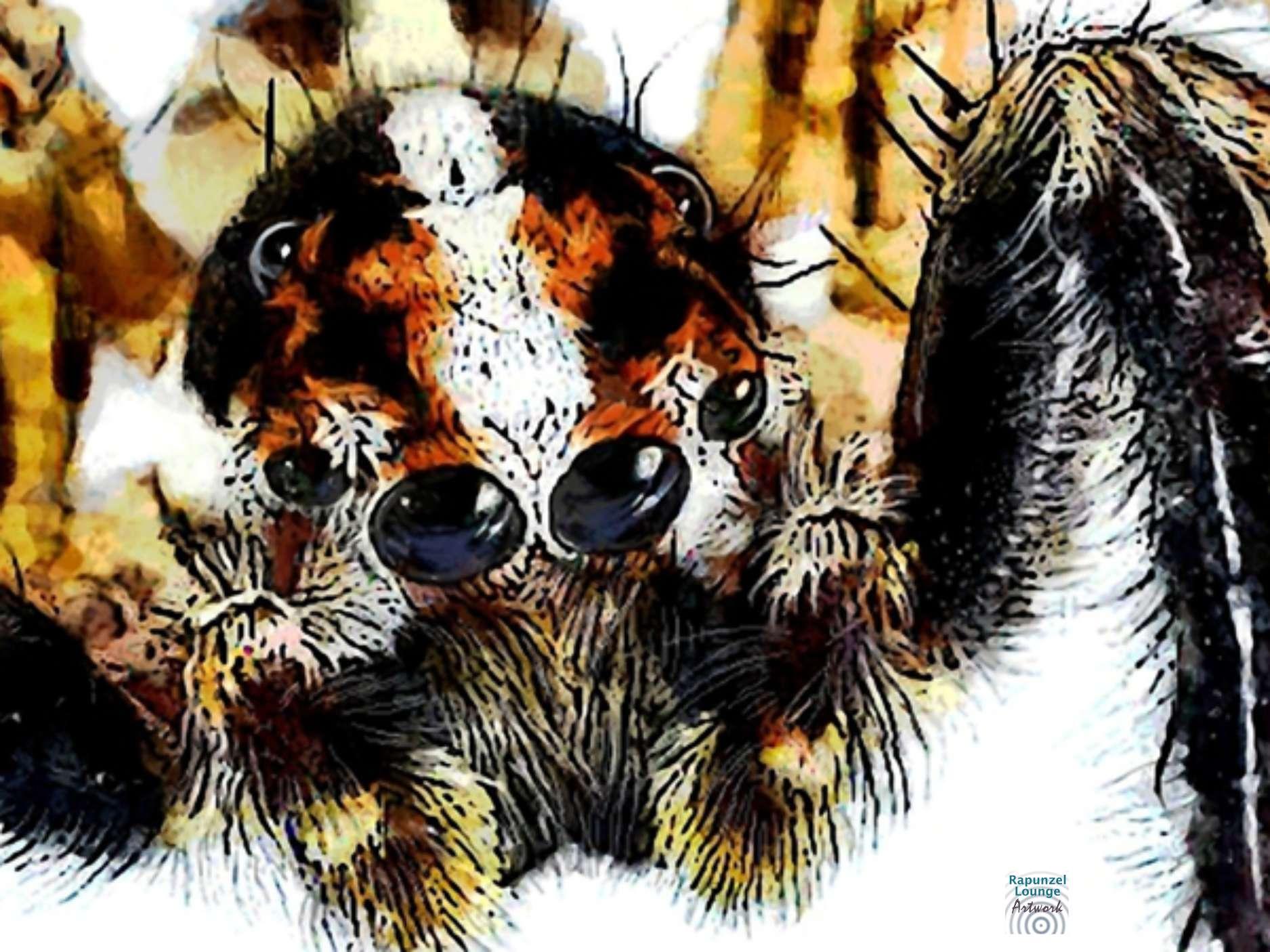 Krafttier Spinne (Ausschnitt) bei www.rapunzellounge.de