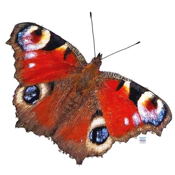 Zur Krafttier Schmetterling Bedeutung