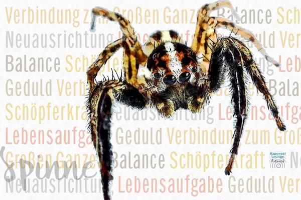 Das Wesen vom Krafttier Spinne bei www.rapunzellounge.de