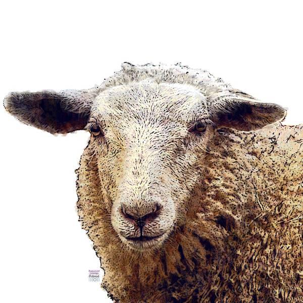 Das Schaf als Krafttier