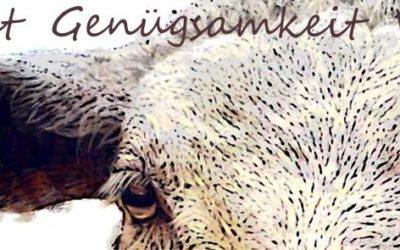 Krafttier SCHAF Sanftmut im Wollpaket