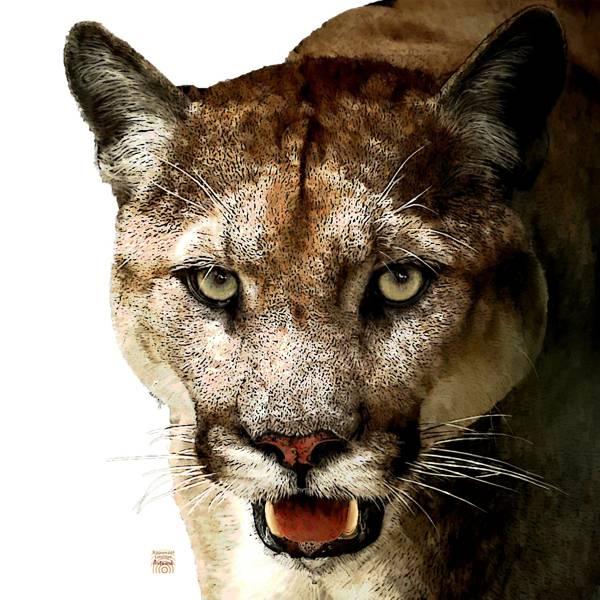 Zur Krafttier Puma Bedeutung