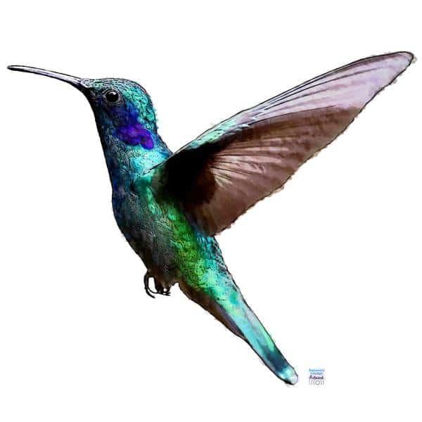 Der Kolibri als Krafttier