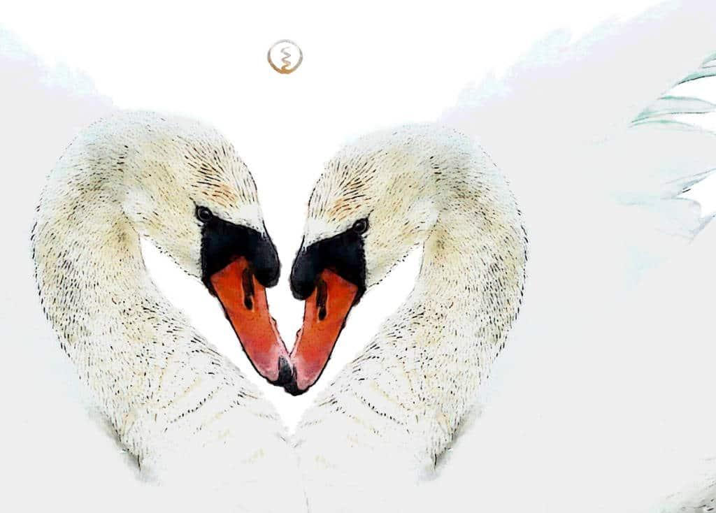 Krafttier Schwan 2 Schwäne Herz
