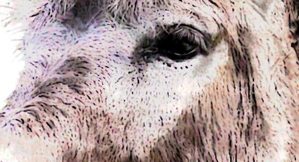 Krafttier Esel Bildausschnitt