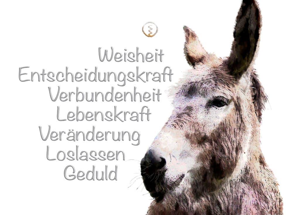 Krafttier Esel und seine Werte