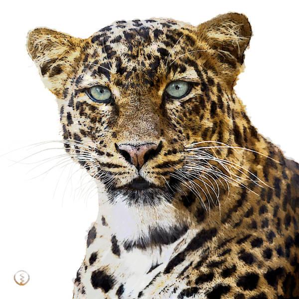 Krafttier Leopard gefleckt Kraftbild