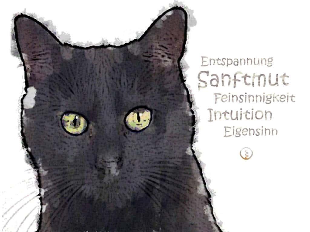 Krafttier Katze Zarte Kampferin